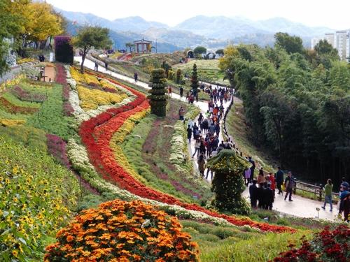 화순에 펼쳐진 1억2천만 송이 국화의 향연…25일 개막