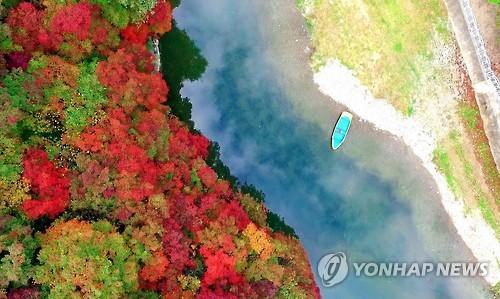 [#꿀잼여행] 강원권: 붉은 단풍, 은빛 억새, 푸른 강물…조각배 하나 둥둥