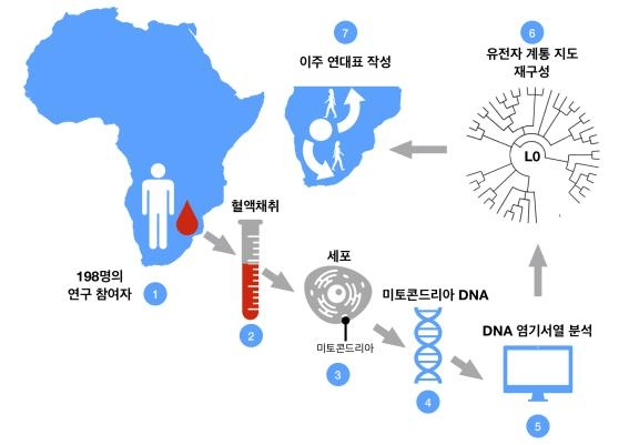 This image provided by the Institute for Basic Science (IBS) shows the use of DNA to discover the emergence of humankind's common ancestors and how they migrated in Africa. (PHOTO NOT FOR SALE) (Yonhap)