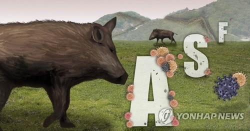 S. Korea reports 5 more African swine fever cases in wild boars - 1
