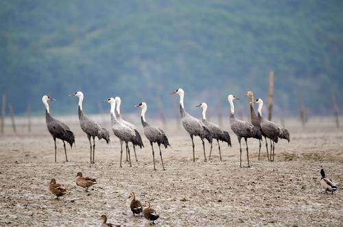 S. Korea's tidal flats deferred in world heritage preliminary review