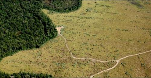 지난 30년간 독일 국토 면적의 2배 넘는 아마존 열대우림이 사라진 것으로 나타났다. [브라질 뉴스포털 UOL]