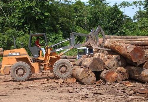 아마존 열대우림에서 대규모로 이뤄지는 삼림 벌채 [국영 뉴스통신 아젠시아 브라질]