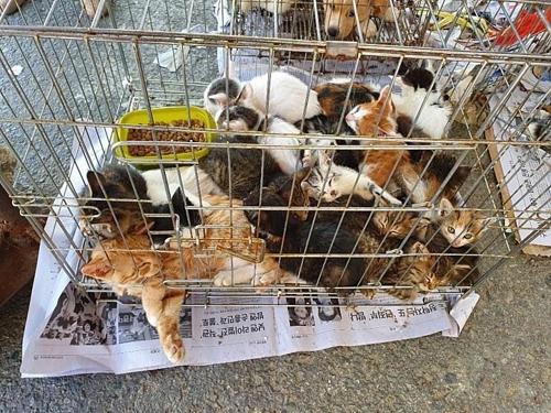 담양 5일시장에서 판매되는 동물