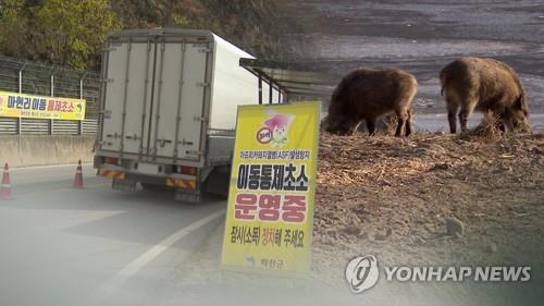 감염 멧돼지 또 발견…발병지 총기 사용 촉구 (CG)