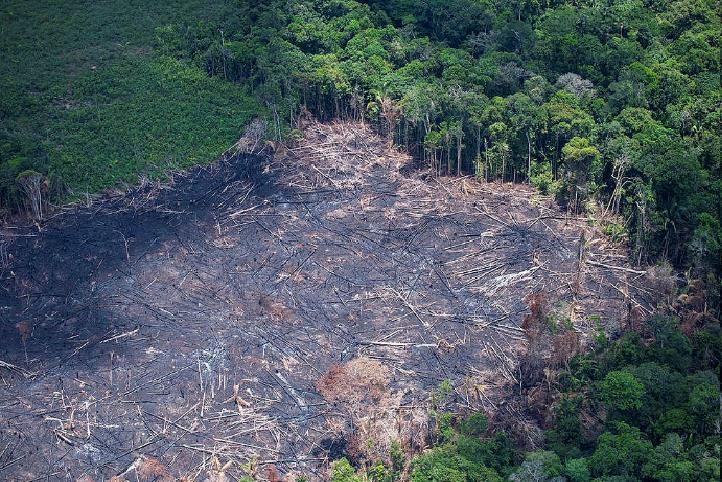 무단벌채로 잘려 나간 아마존 열대우림 [국제환경단체 그린피스]