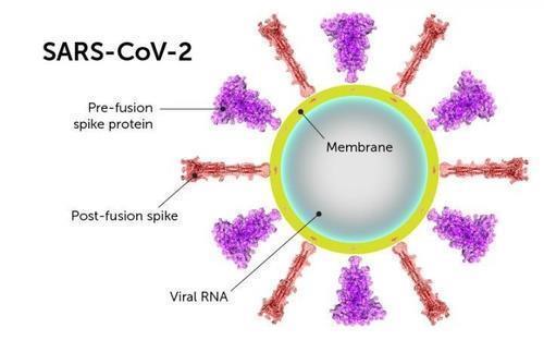 스파이크 단백질 구조