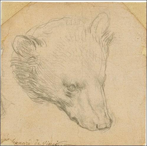 레오나르도 다빈치의 '곰의 머리'