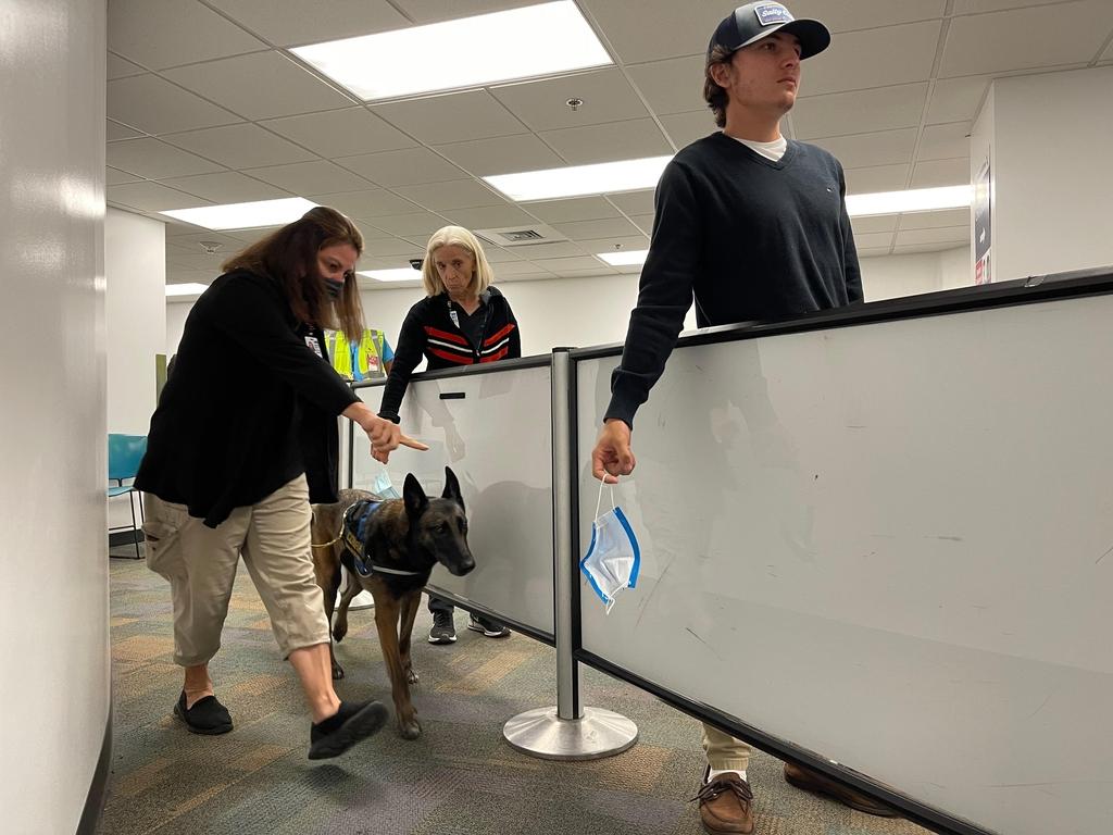 미국 플로리다주(州) 마이애미국제공항에서 신종 코로나바이러스 탐지견 '원베타'가 8일(현지시간) 임무를 수행하고 있다. [마이애미국제공항 제공=연합뉴스. 재판매 및 DB금지]