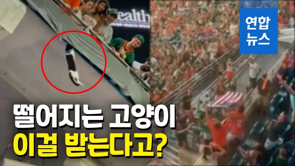 [영상] 풋볼 경기장 난간서 고양이 추락…그 순간 성조기가 쫘~악 - 2