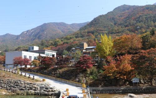 옥천 장령산자연휴양림, 가을 단풍에 물들다 - 1