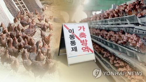 Suspected bird flu cases discovered in Gangwon Province