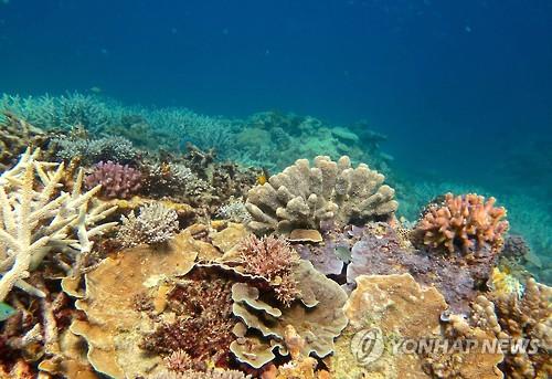 그레이트 배리어 리프 남부의 건강한 산호초