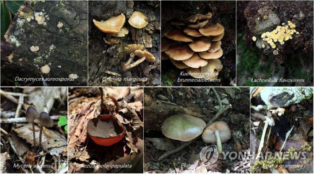 한라산서 발견된 신종 후보종·한국 미기록종 버섯류
