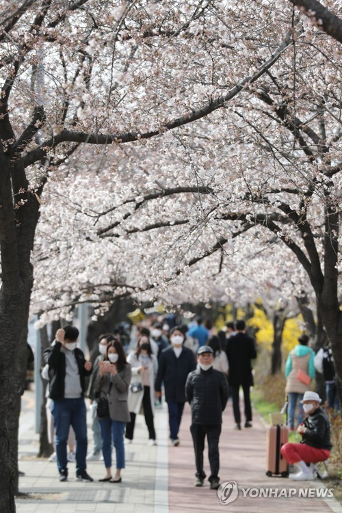 Seoul citizens enjoy cherry blossoms in Yeouido