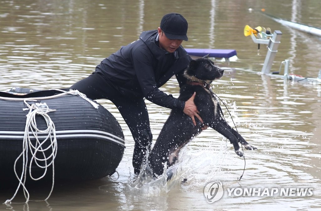 Dog rescued from flooded village